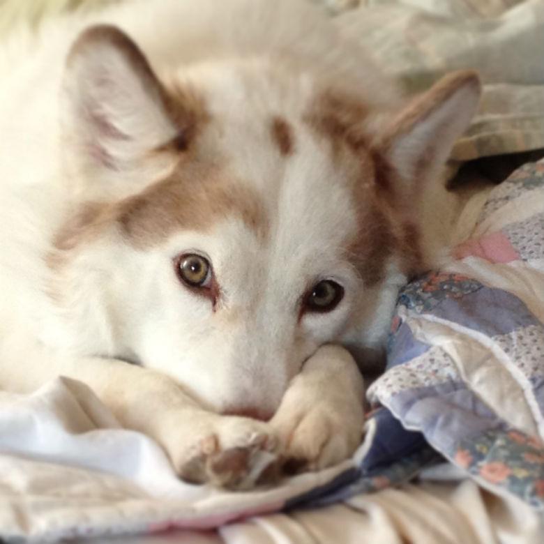 Our dog Lola