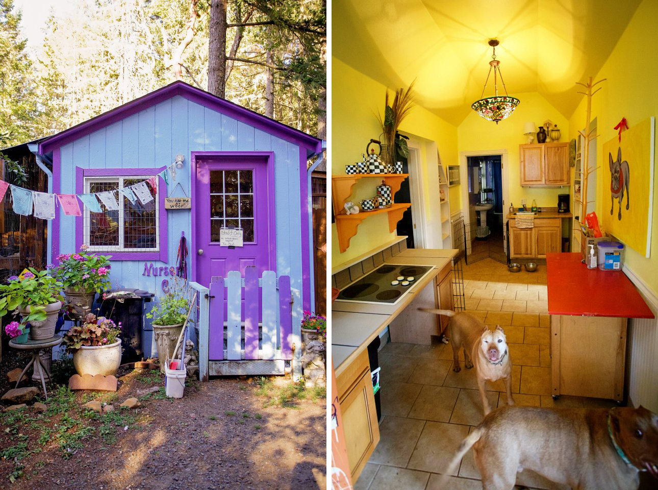 This Rescue Built Tiny Cottages For Pit Bulls While They