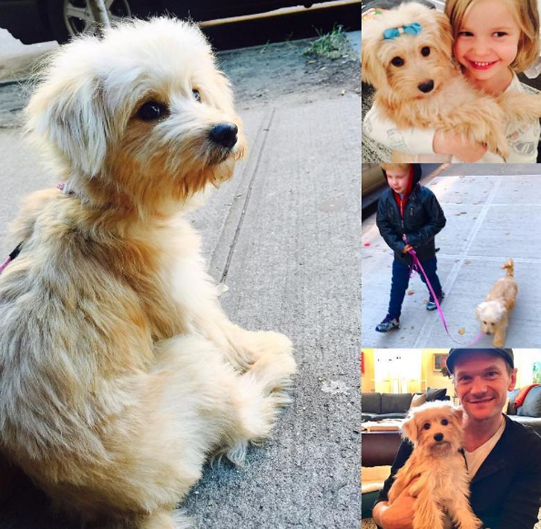 Gidget and her name family. Image Credit: Instagram/David Burtka