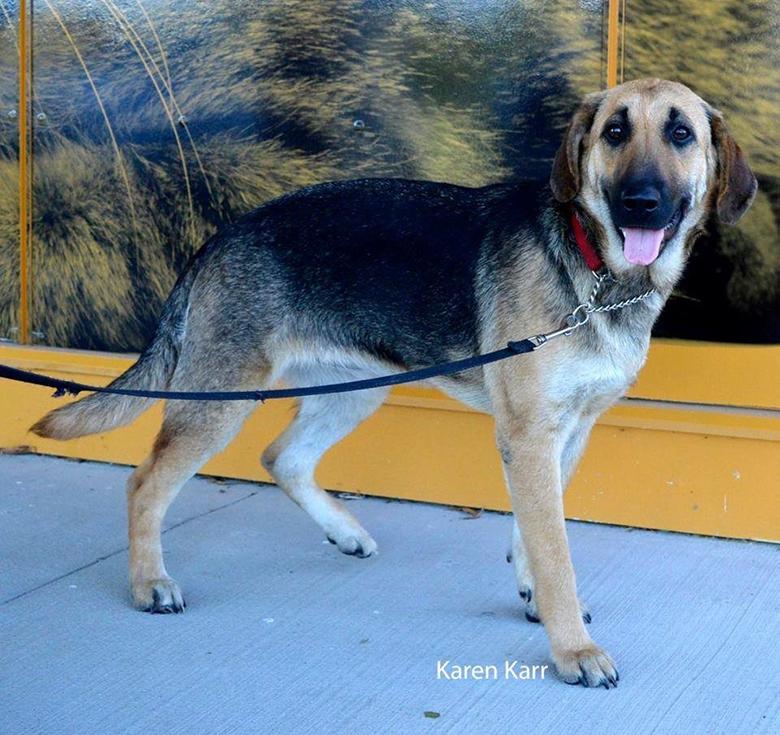 After image of dog rescued.