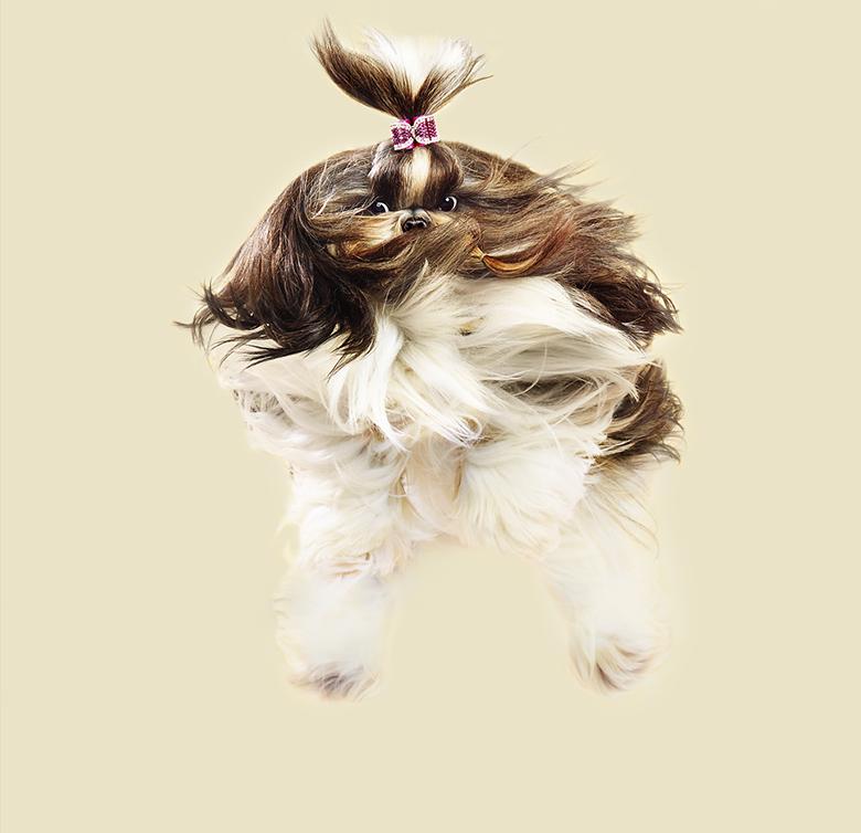 Flying Dogs Book Julia Christe 2