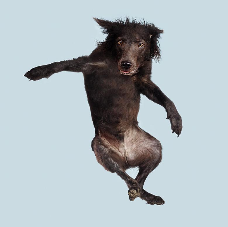 Flying Dogs Book Julia Christe 5