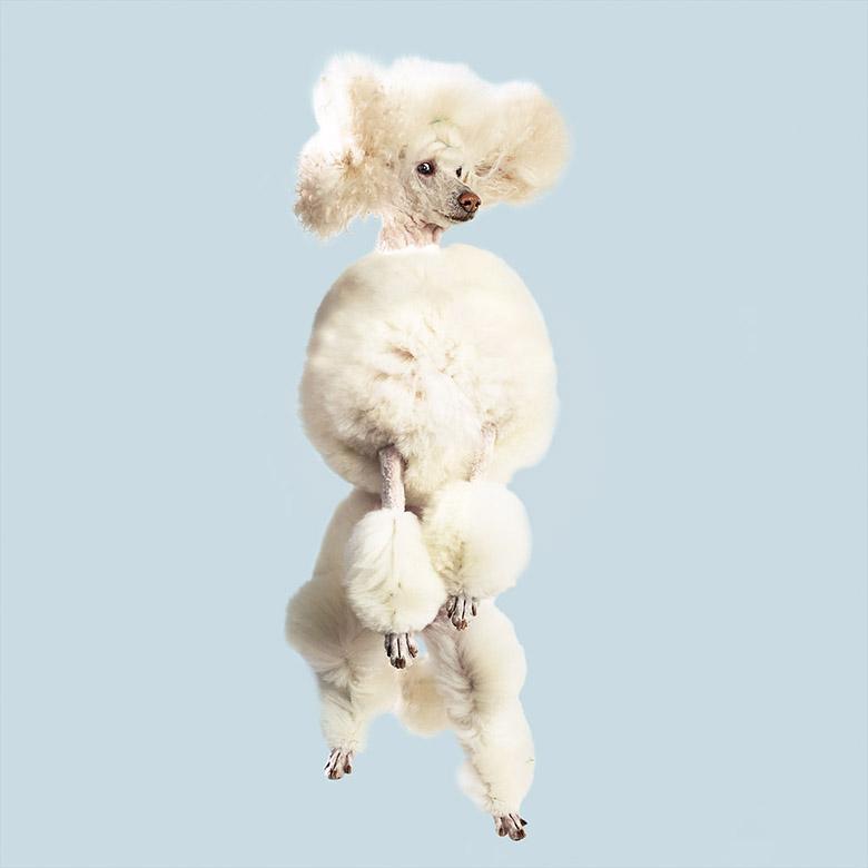 Flying Dogs Book Julia Christe 6