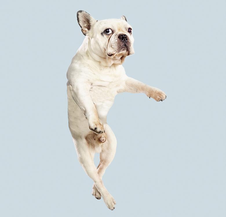 Flying Dogs Book Julia Christe 8