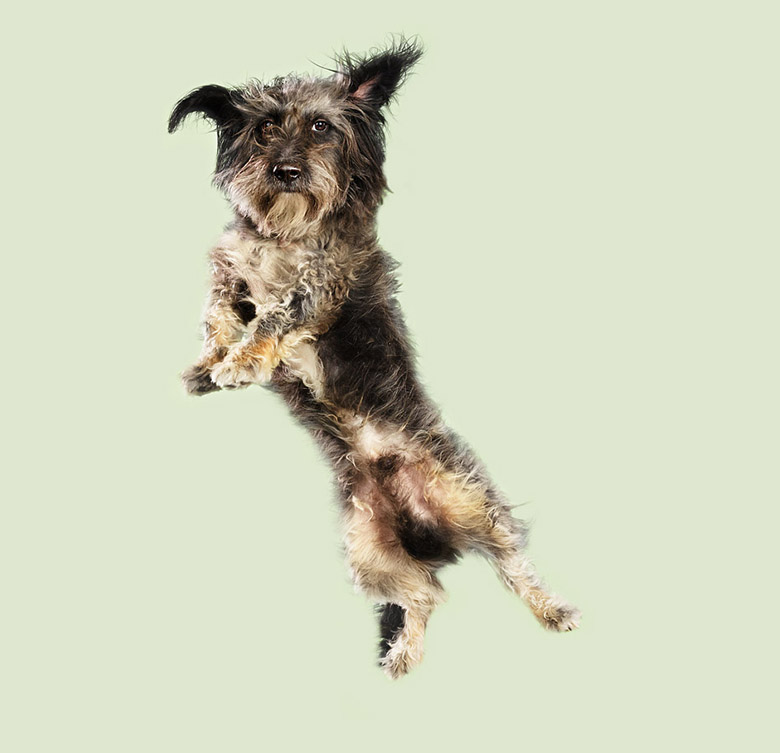 Flying Dogs Book Julia Christe 9