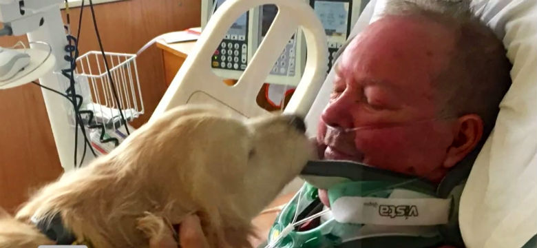 dog stays with owner for 20 hours after he broke his neck 1