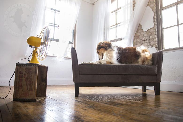 Keno, the borzoi. Image Credit: Scruffy Dog Photography.