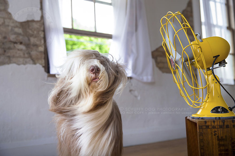 Party, the bearded collie. Image Credit: Scruffy Dog Photography
