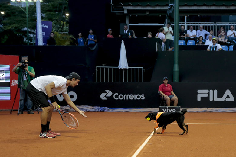 Brazil-Open-and-ball-dogs-1