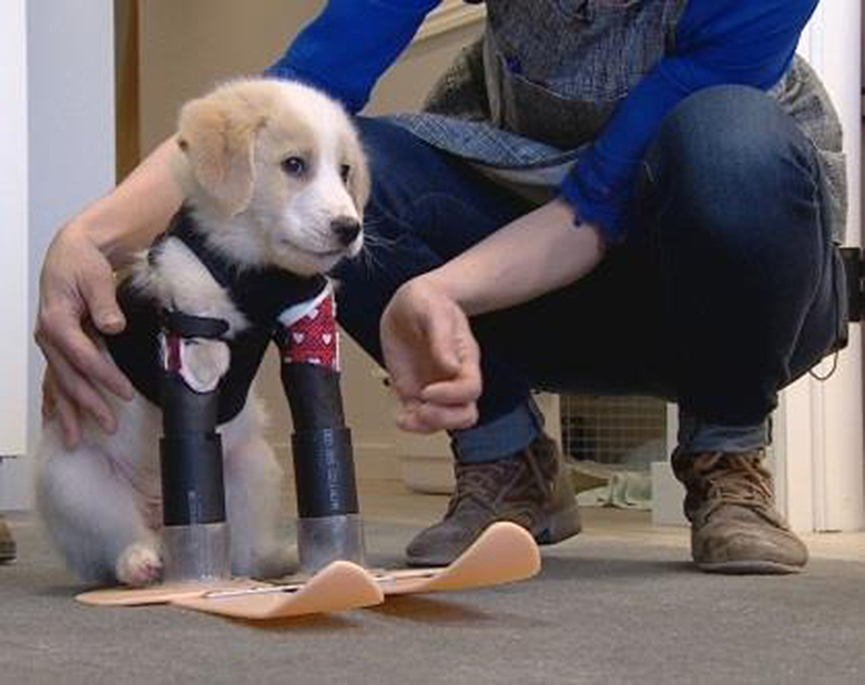 Cupid dog born without front two legs 2