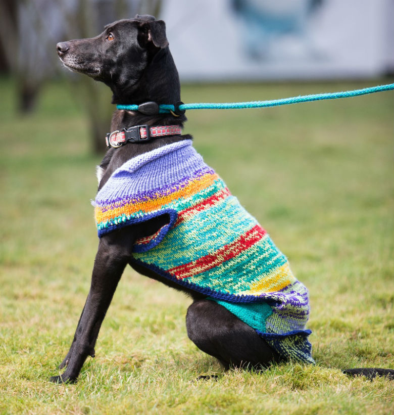 Womens Group Knits Sweaters For Black Dogs To Help Them Get Adopted