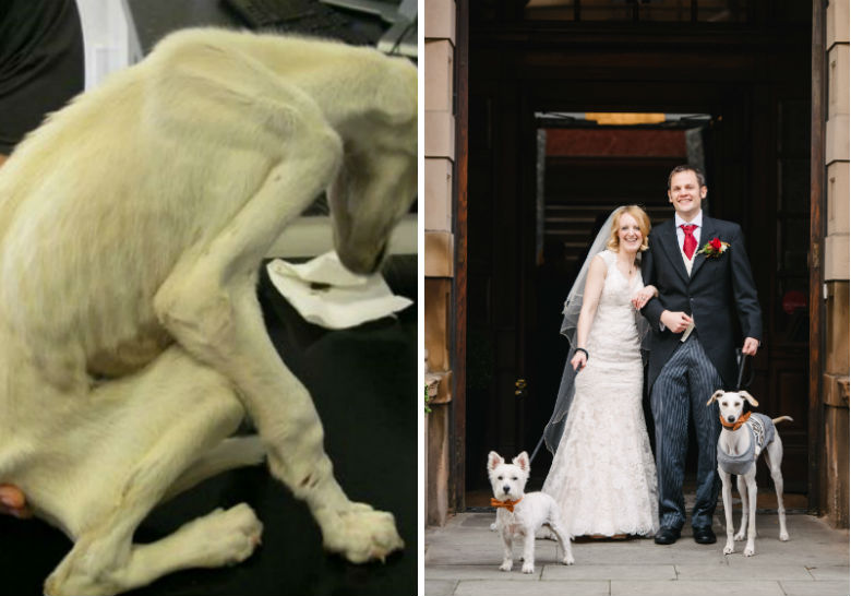 Dog Found Weighing Only 6 Pounds Recovers To Walk New