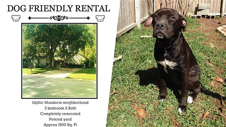 Woman Rents to Just Pit Bull Owners 4