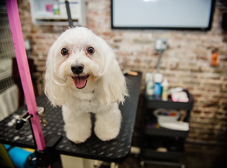 The 10 Best Dog Groomers in Manhattan for 2017