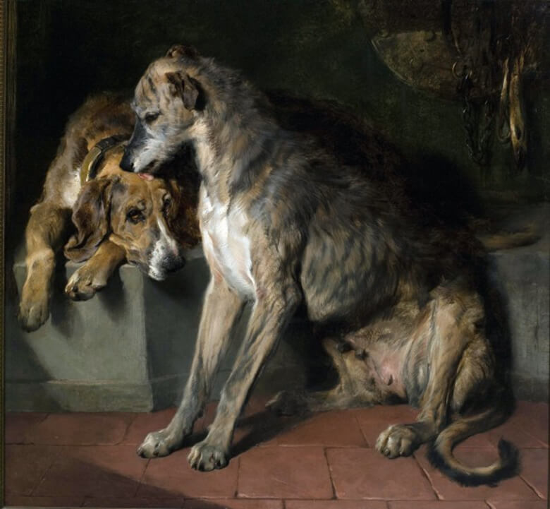 the museum of the dog deerhound and foxhound