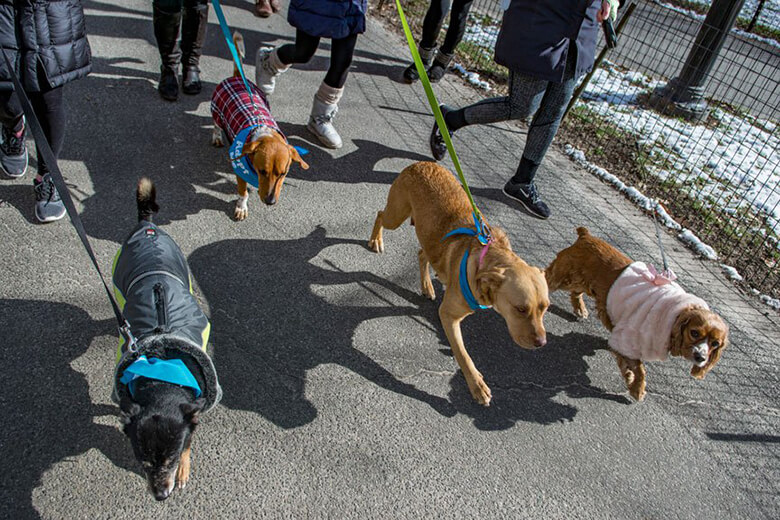 Foster Pack Walk in Central Park. Photo: NinaChiofalo.com