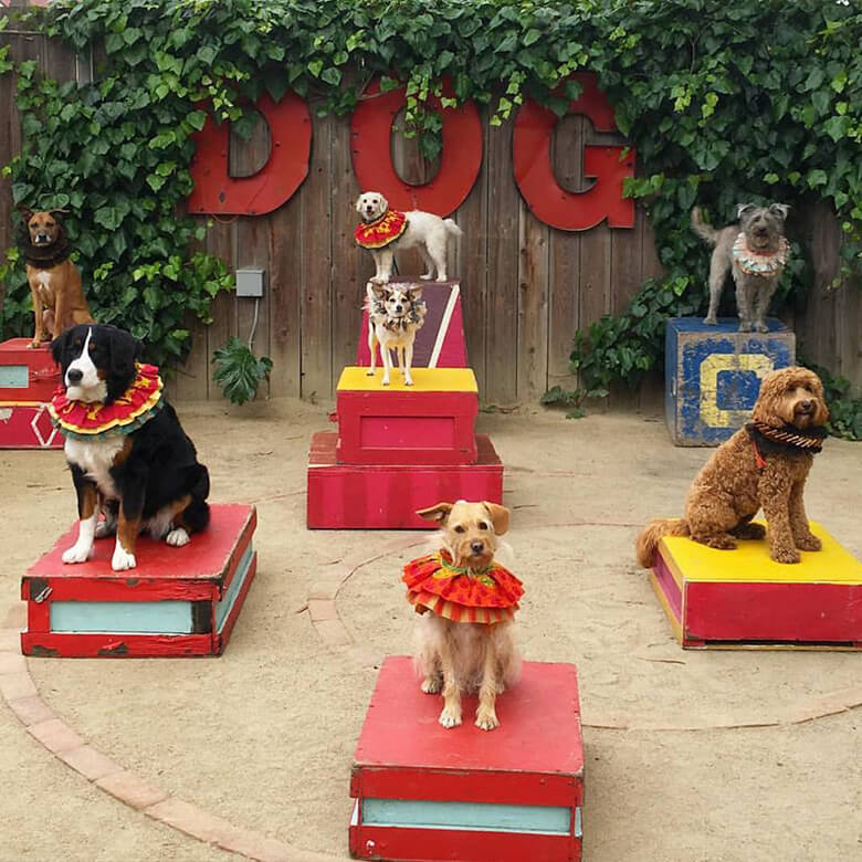 Canine Circus School 21