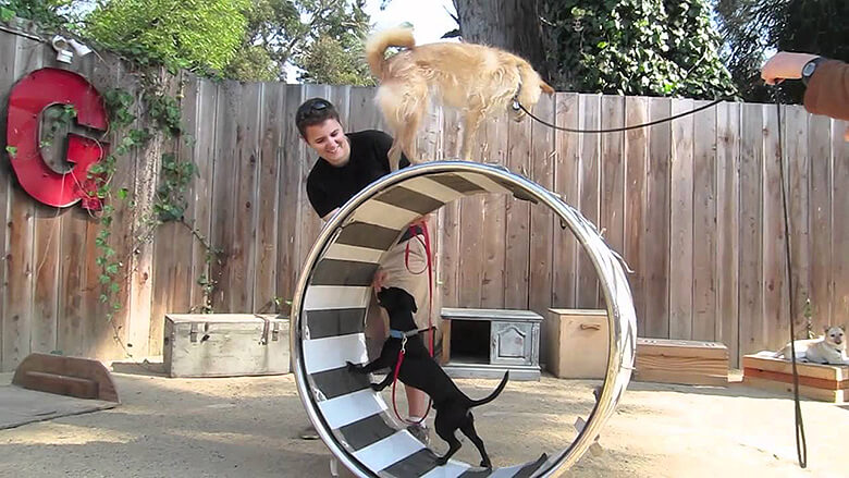 Image Credit: Canine Circus School