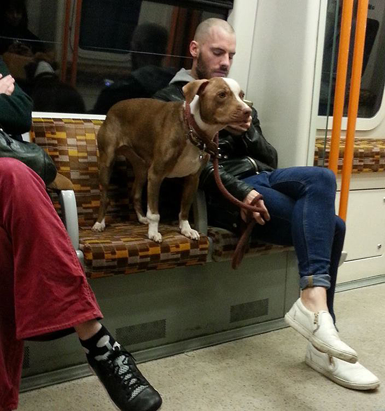 Image Credit: Dogspotting group on Facebook