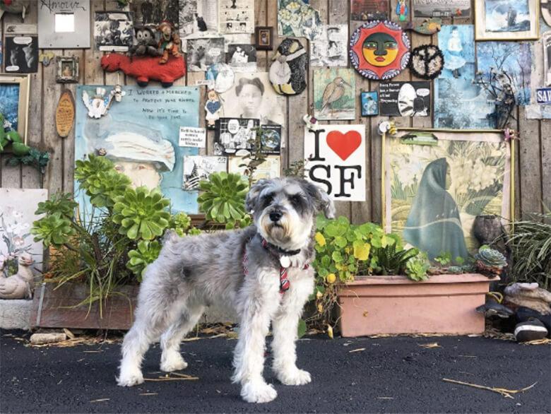 Dog Friendly Housing San Francisco