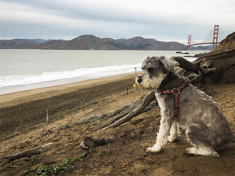 Remy and Best Places to go in San Francisco Baker Beach