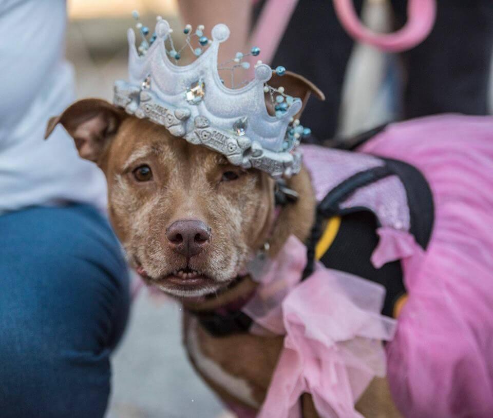 Senior Dog Prom