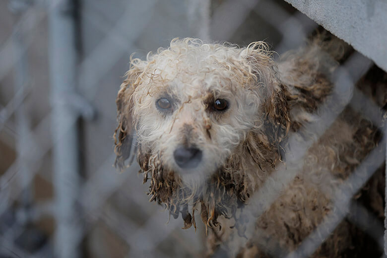 Brandon Wade/AP Images for The Humane Society of the United States