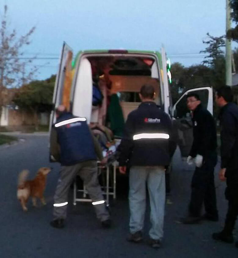 Dog Refused to Leave Owners Side in Argentina