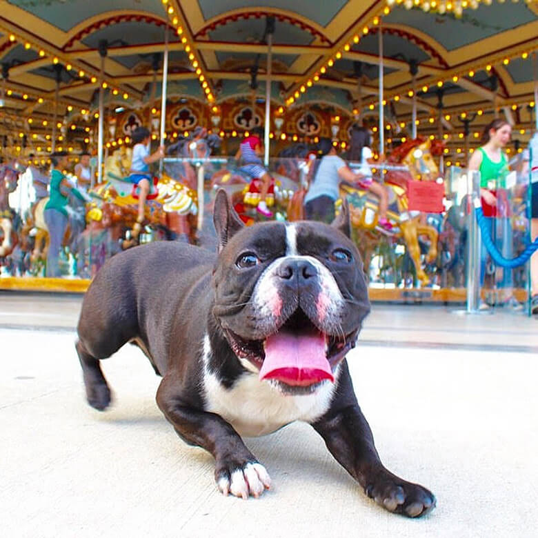Image Credit: Oscar the Frenchie