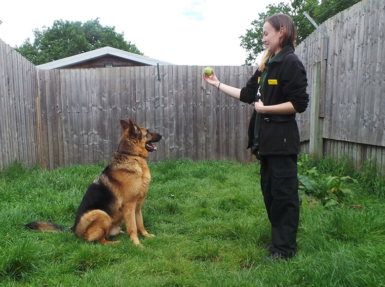 Image Credit: Dogs Trust