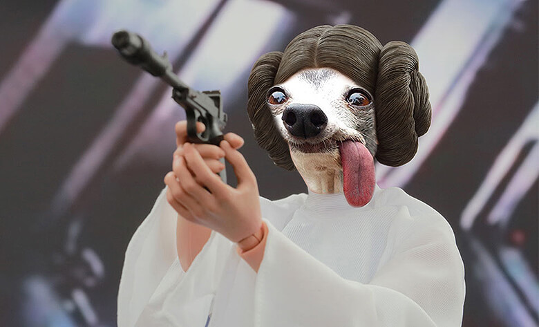 Dog with tongue out photoshopped 14