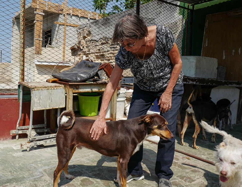 Nora García with some of her rescued dogs on the patio area of Aniplant, Cuba. Image Credit Ralph afadsfs