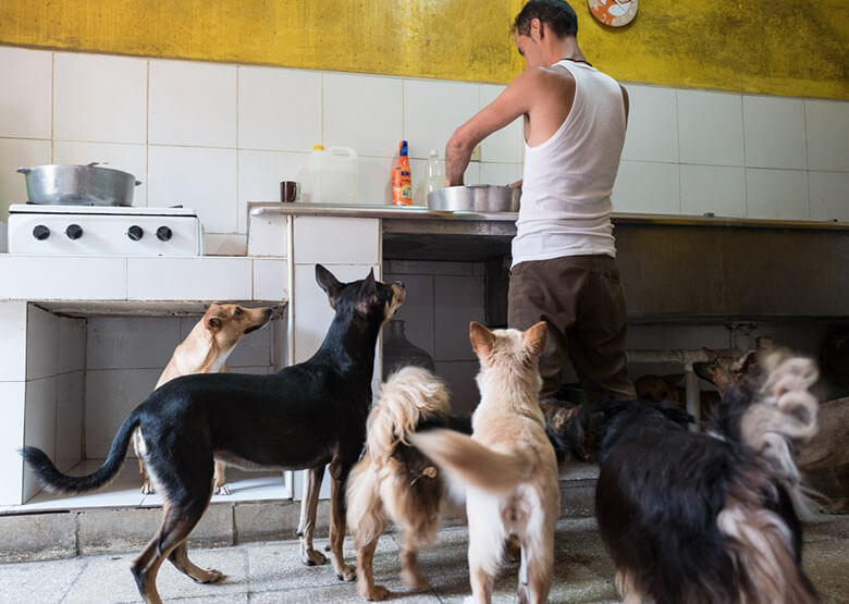 A group of dogs wait anxiously as their caretaker Enrique prepares a meal. Aniplant, Cuba. Image Credit: Ralph Quinonez