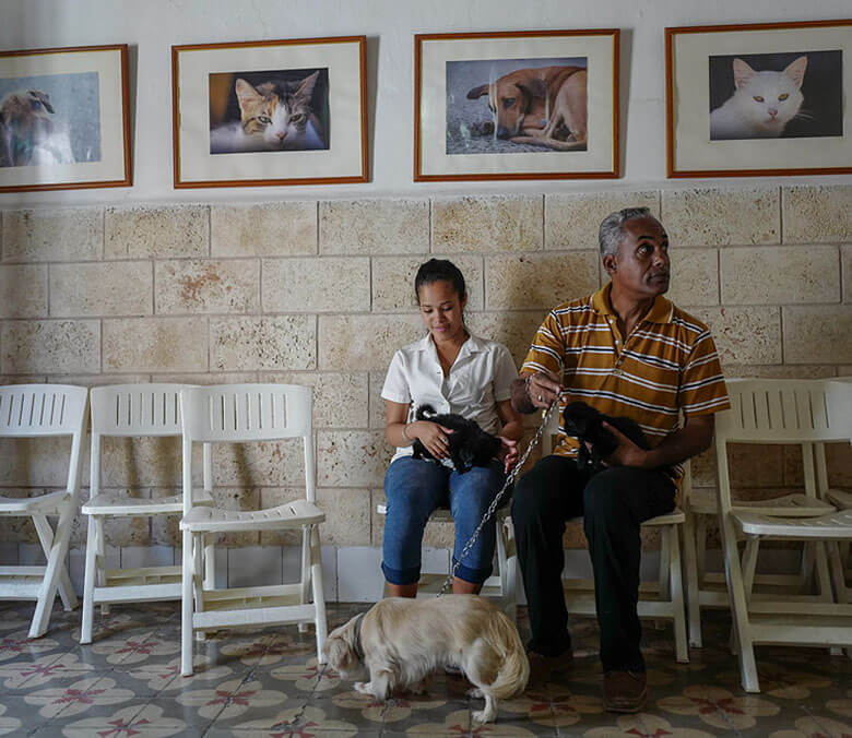 A father and daughter bring in their two six week old puppies for an examination. Aniplant, Cuba. Image Credit: Ralph Quinonez
