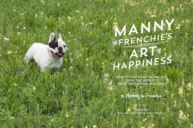 Manny the Frenchie 2