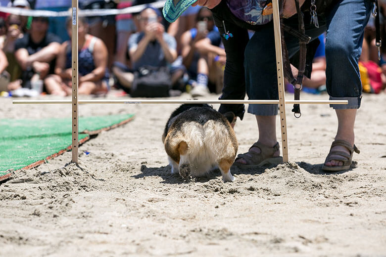 SoCal Corgi Event 10