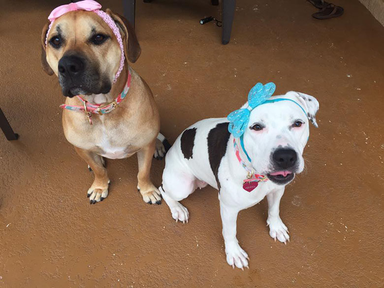 Love Is Fur Ever Dog Rescue and Bonnets for Abigail