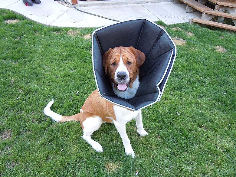 All Four Paws Comfy Cone Dog Collar