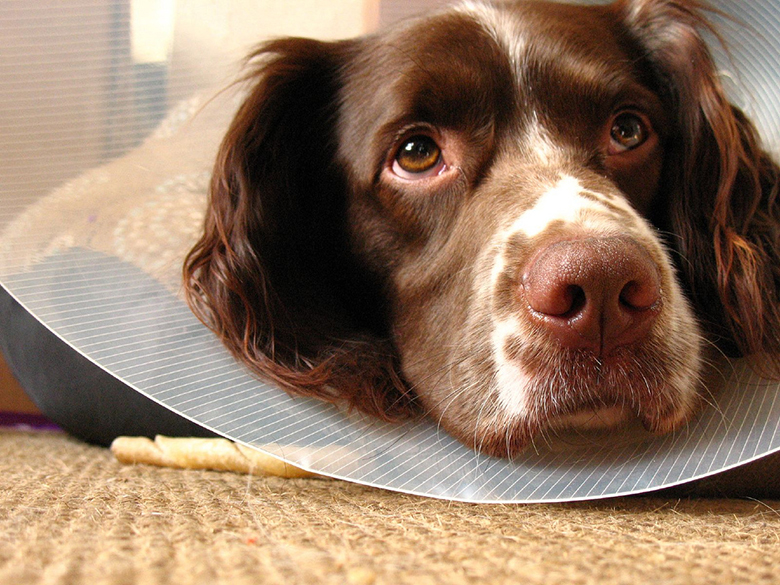 6745b7e036e 11 Better and Cheaper Alternatives to Your Vet s Awful Cone of Shame