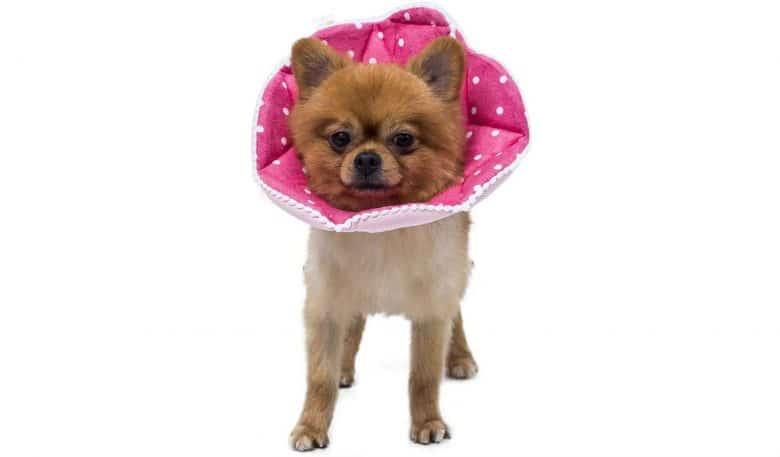 WZPET Adjustable Dog Collar
