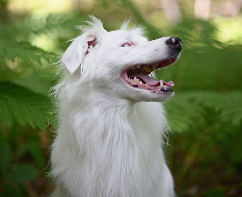 Image Credit: Braille The Double Merle/Facebook