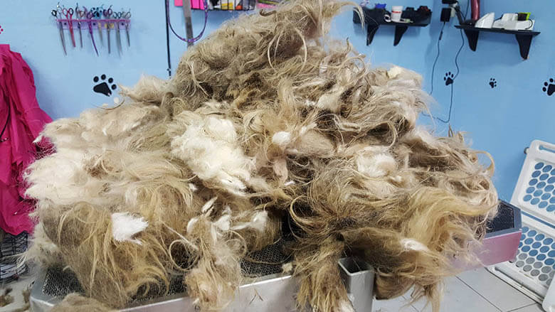 How much hair removed. Image Credit: BGE Grooming