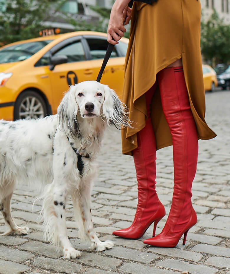 Image Credit: The Dogist. Fendi shoes.