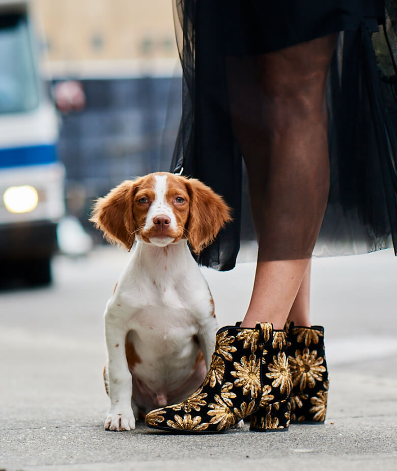Image Credit: The Dogist. Laurence Dacade shoes.