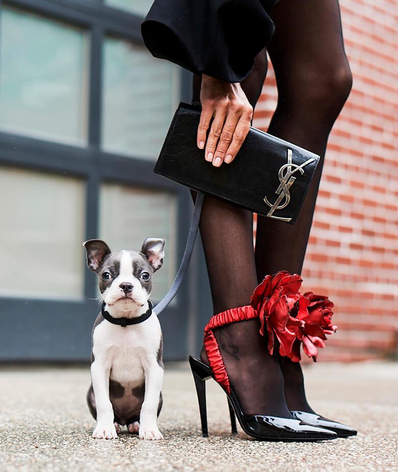 Image Credit: The Dogist. Saint Laurent shoes