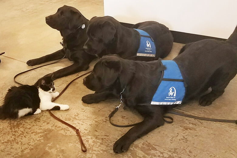 Image result for This Cat Named D-O-G Helps Train Pups To Be Service Dogs