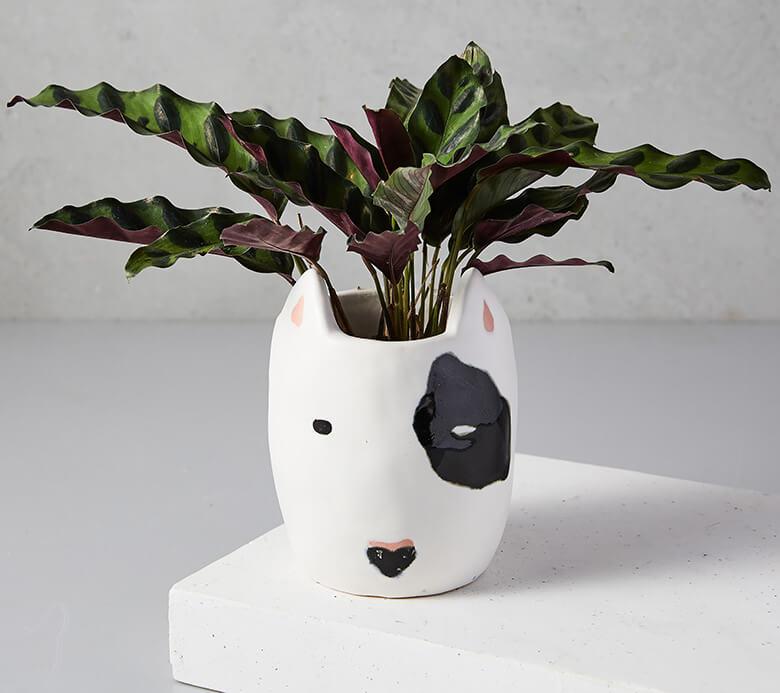 West Elm Dog Planter