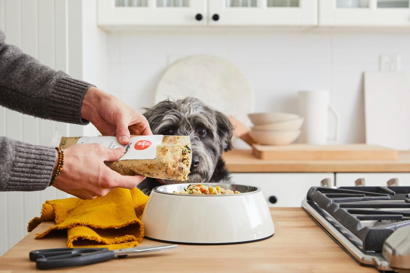 We Compared the Top Fresh Dog Food Delivery Companies on Ingredients, Price, and What Makes Them Special