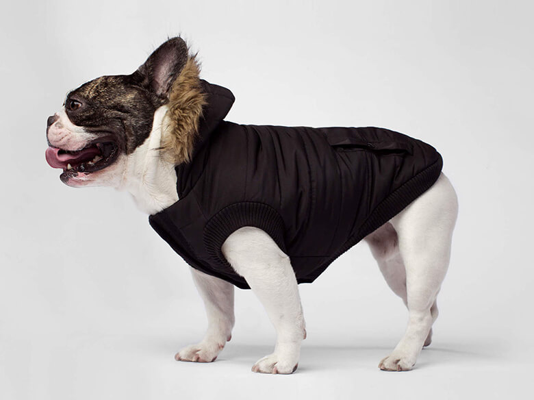 Brrr! Check Out the 8 Best Dog Winter Coats
