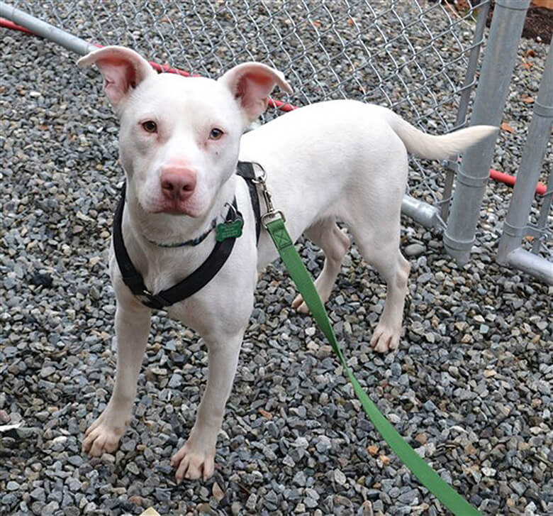 Deaf Rescue Dogs For Adpotion